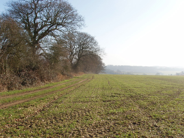 Winter wheat on Flackwell Heath