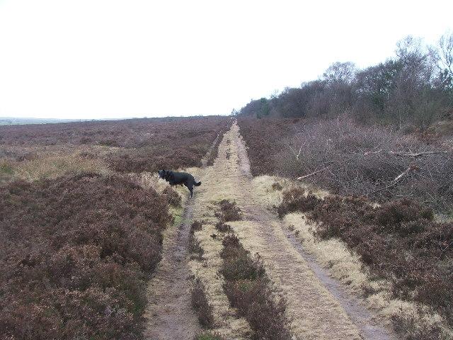 Track near the Bridestones.