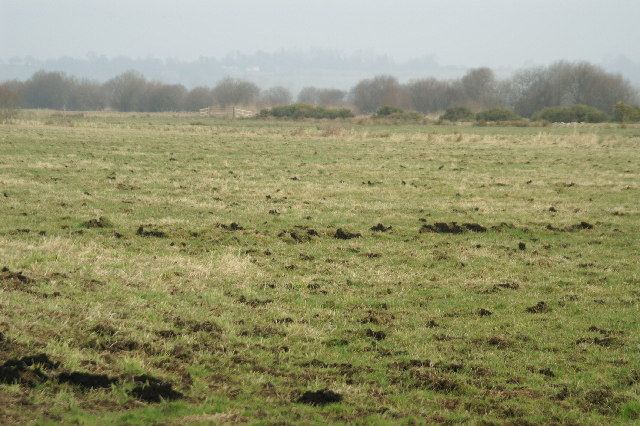 Field on Westhay Level