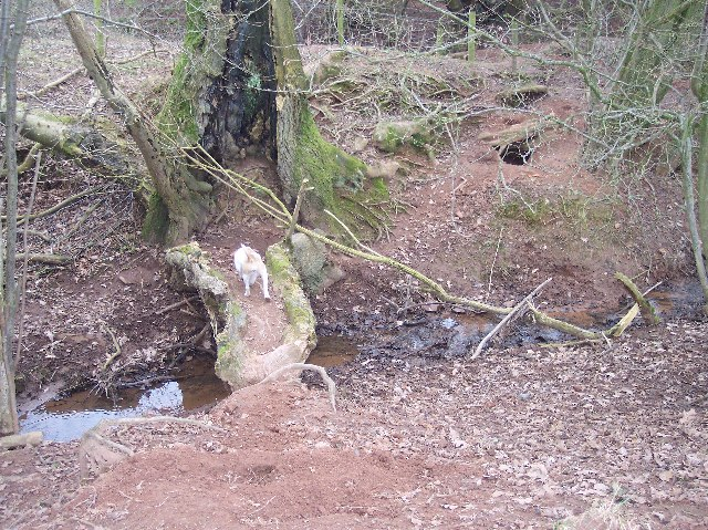 Badger Sett and Natural Bridge