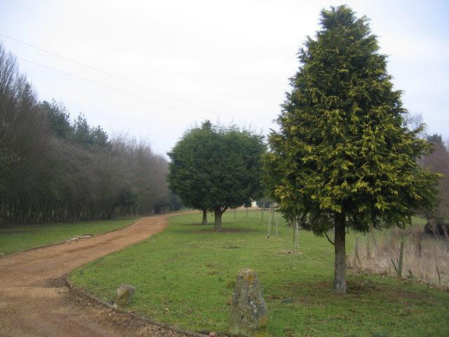 Woodfield Farm driveway