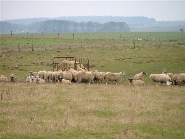 Sheep Pasture, Off Back Lane