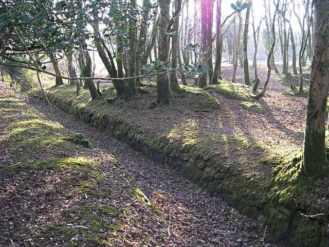 A leat in woodland