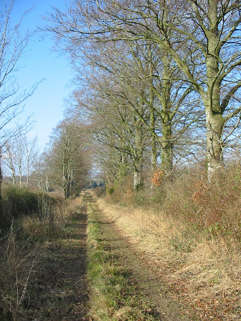 Beeches on track to Knoll Farm
