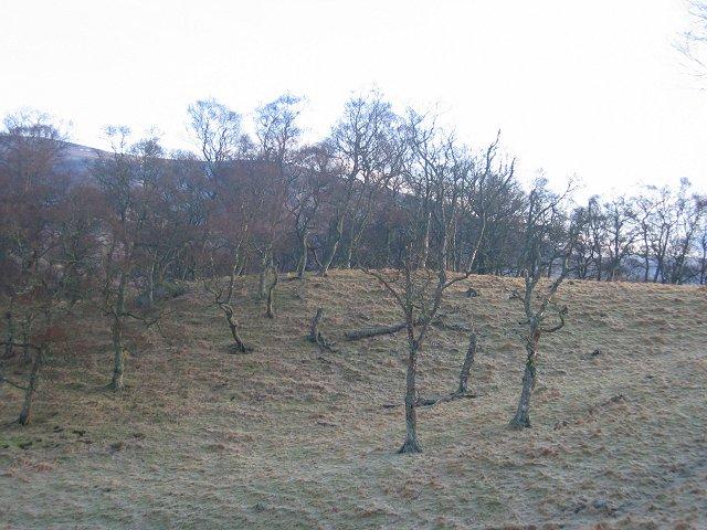 Birchwoods, Newbigging.