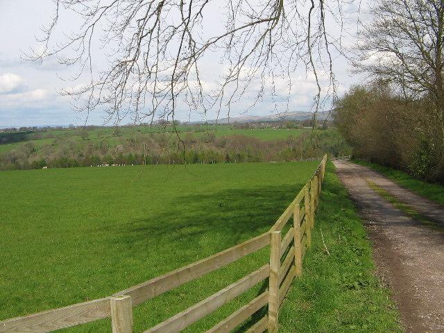 Eden Brows Woodland