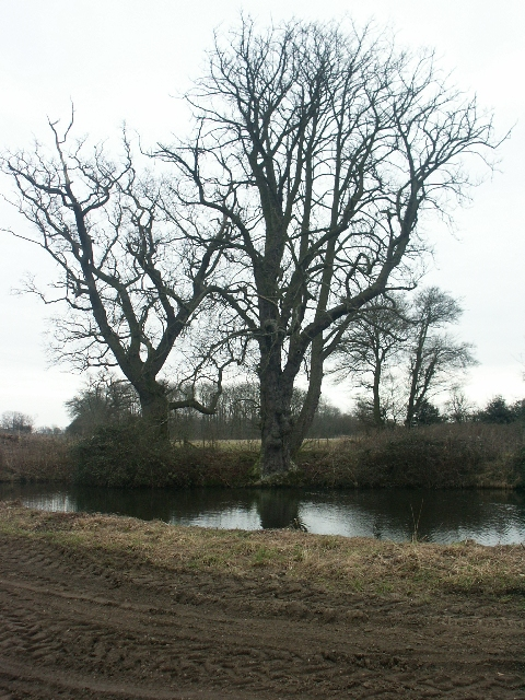 Trees and pond, Manor Farm, Arminghall