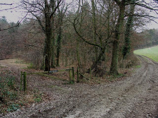 Leygrove�s Wood