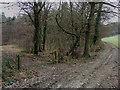 SU7993 : Leygrove's Wood by David Ellis