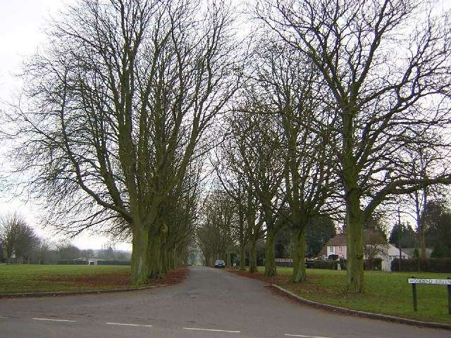 Tree-lined avenue at Woodend Green, Henham