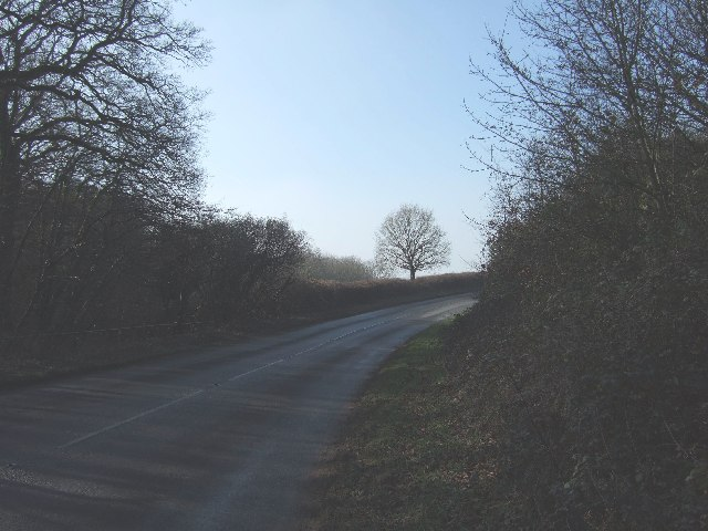 B3179 leaving woods to the east of Woodbury
