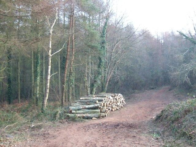 Part of Wheathill Plantation