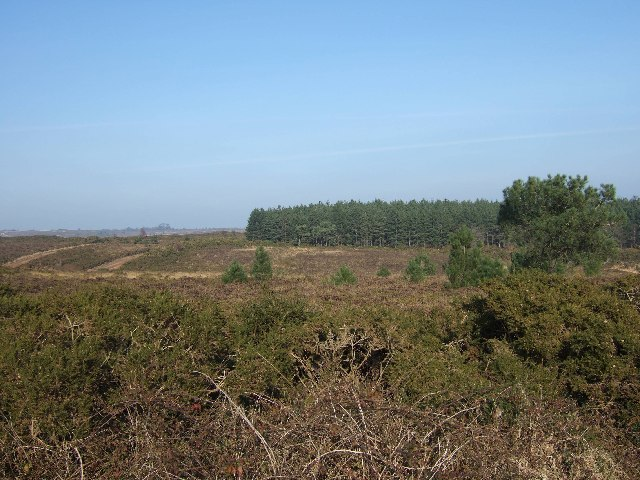Bicton Common and Uphams Plantation