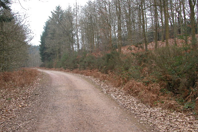 Forest track, Worrall Hill