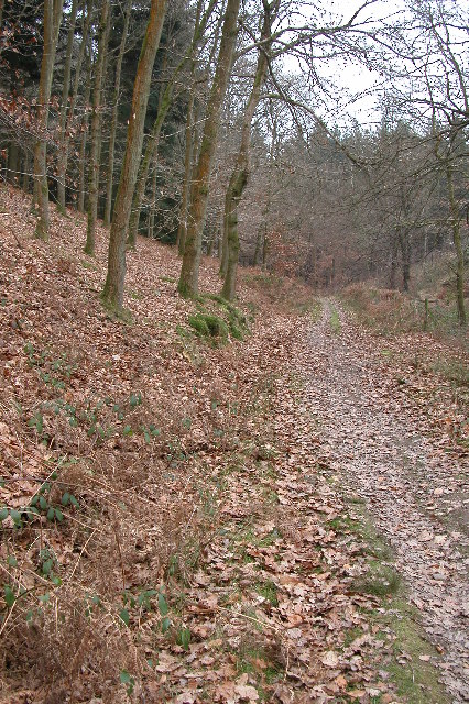 Sallowvallets Inclosure, Forest of Dean