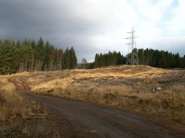 Forest track and hydro pylons