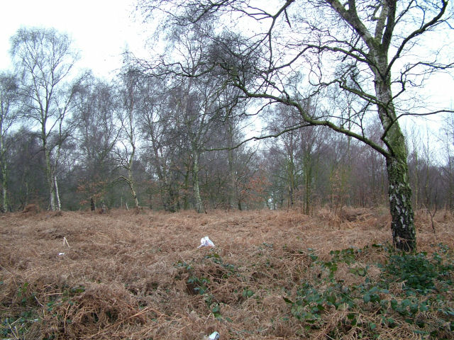 West Haigh Wood