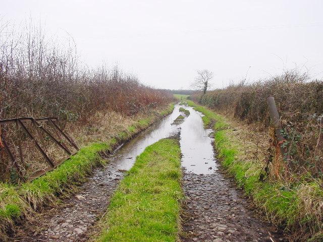 Wet Farm Track