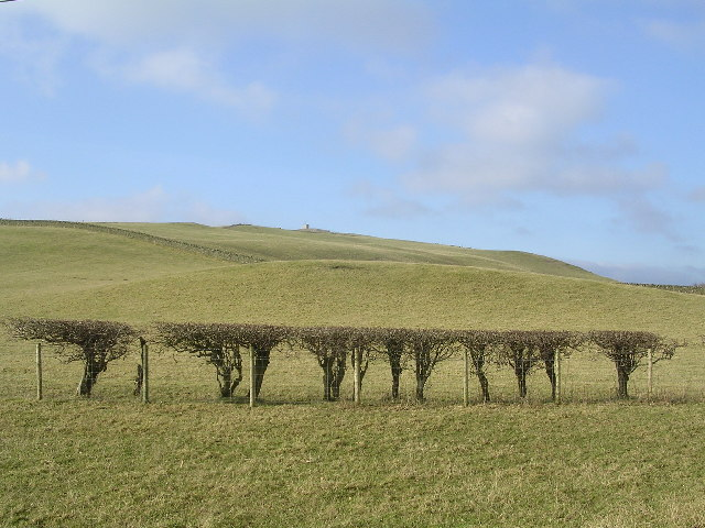 Cropped Hedge near Burnside Farm