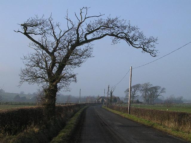 Droopy Tree near Upper Locharwoods