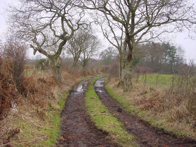 Bridleway to Woods