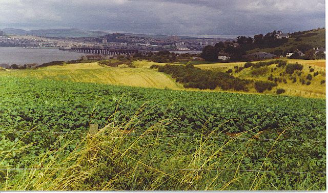 Potato Field at Peace Hill, by Wormit.