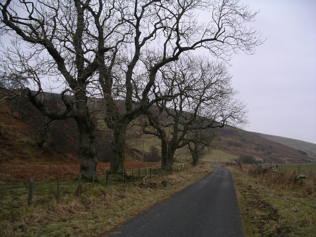 Road and trees, Kelphope valley