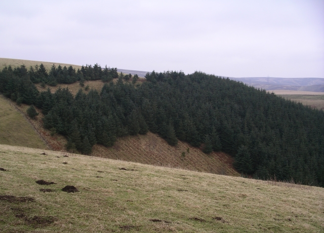 Forestry Plantation, Cozie Cleugh