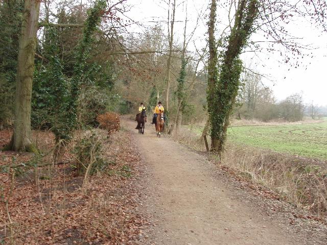 Horses on bridleway, near Watford