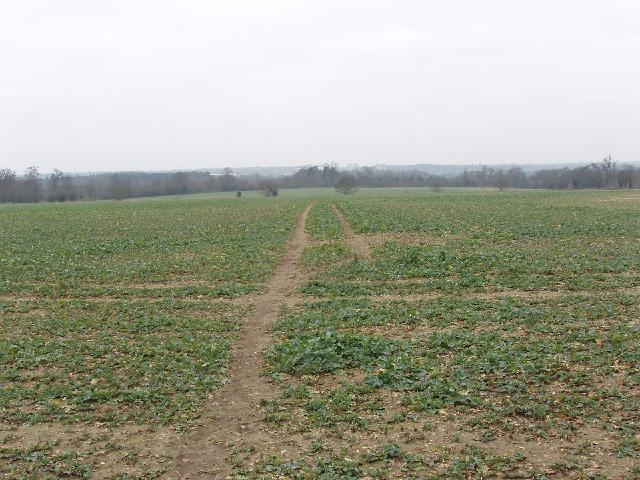 Footpath through crops, near Aldenham