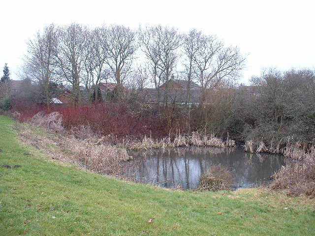 Duck pond at Tanterton