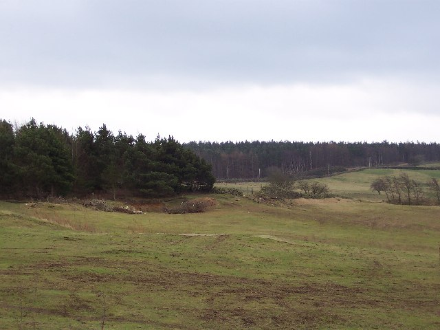 Plantation at High Moor