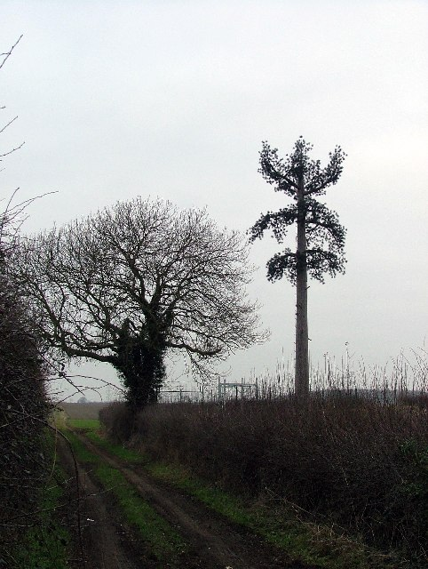 Footpath alongside mobile phone aerial.