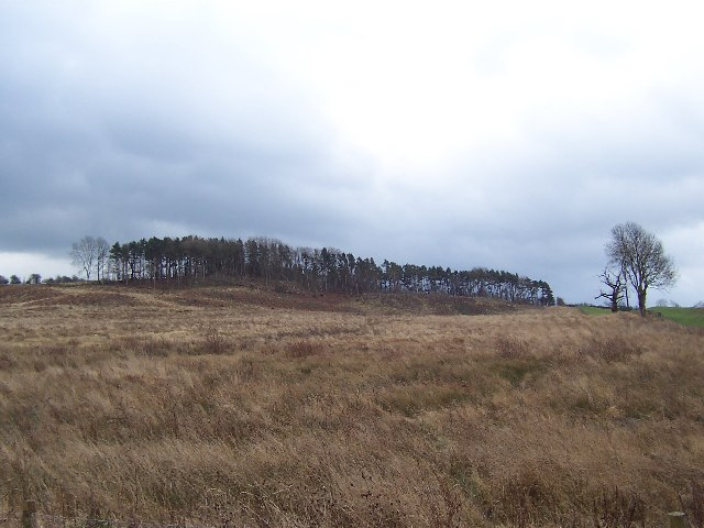 Plantation remnants near Winksley