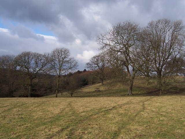 Field above Spa Gill Woods
