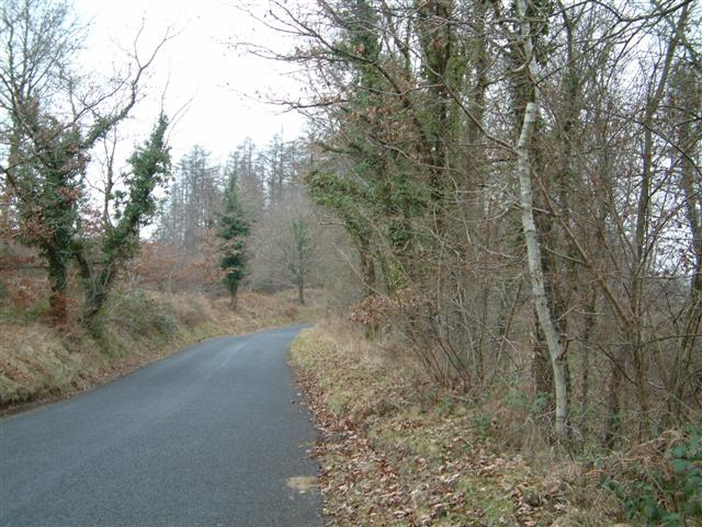 The Road through Wentwood Forest