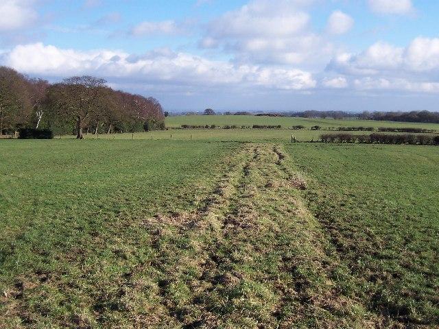Fields by Volla Wood