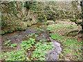 SW4634 : Rosemorran Stream by Sheila Russell