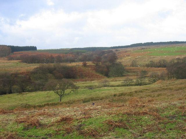 Newbiggin Burn on the edge of the Harwood Forest
