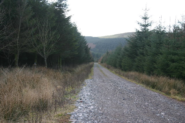 Forest Track into Blengdale