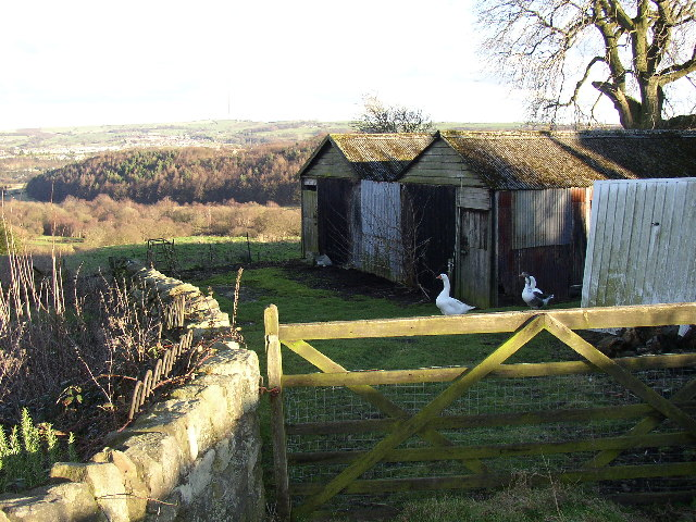 Sheds at the end of Manor Road, Netherton, Farnley Tyas, Yorkshire