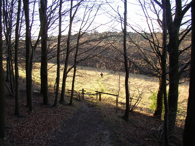 Footpath in North Spring Wood, Thurstonland, Yorkshire