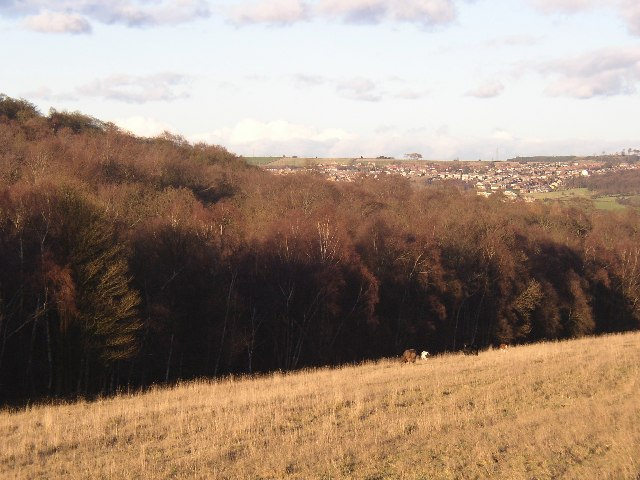 Carr Wood, Farnley Tyas, taken from a footpath in Thurstonland, Yorkshire