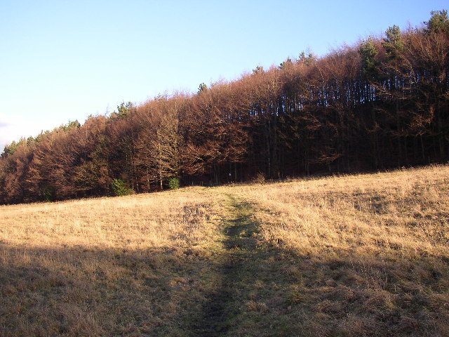 Footpath approaching North Spring Wood, Thurstonland, Yorkshire