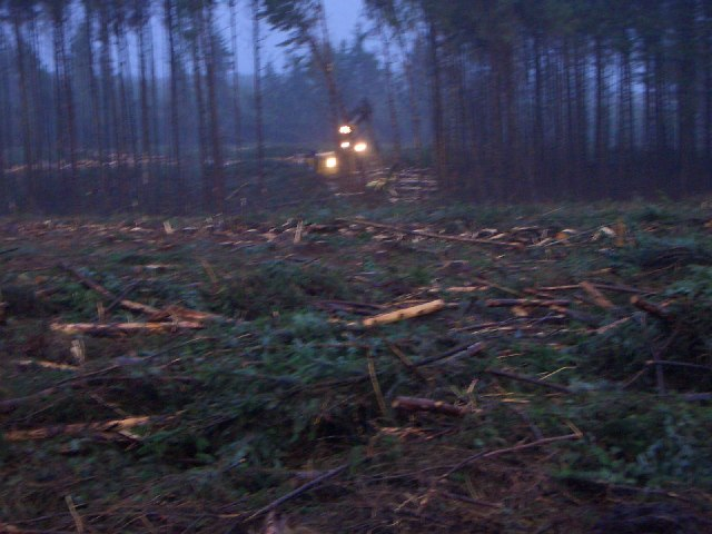 Hopealone - Foresters working at night
