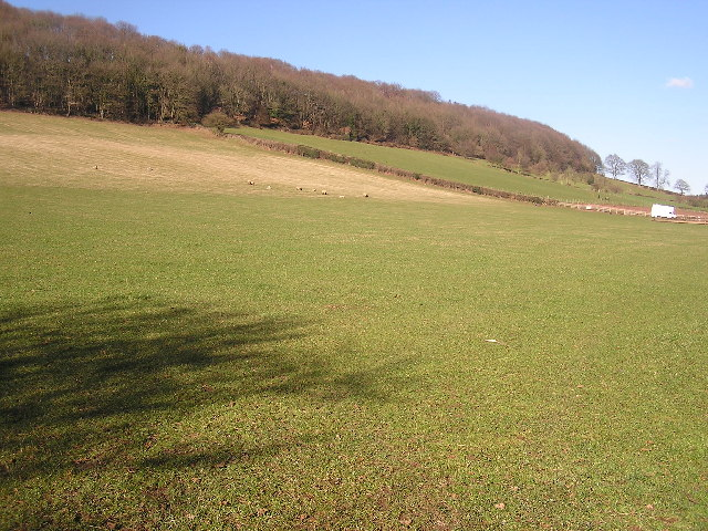 Towards Little Purlieu Wood