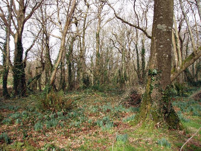 Woodland near Trevedran
