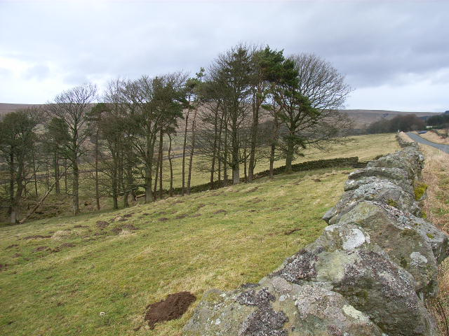 Pastures above Alston