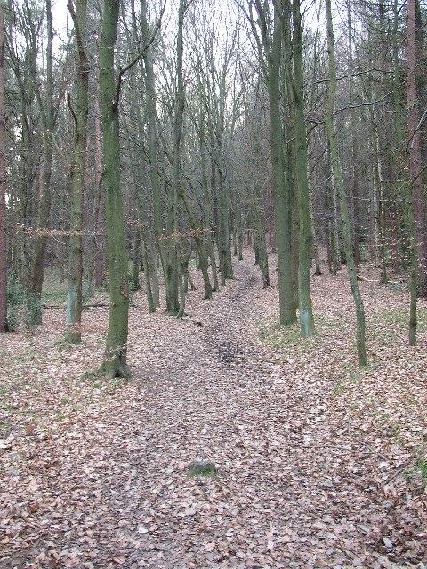 Footpath in Saville Wood, Thurstonland, Yorkshire
