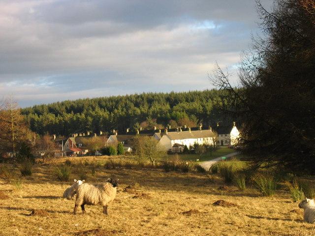 Stonehaugh, Wark Forest